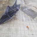 Emergencias decreta preemergencia por vientos de hasta 100 kilómetros por hora y recomienda precaución