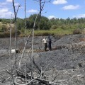 El Consell inicia la recuperación de 6.966 hectáreas de zonas afectadas por incendios forestales