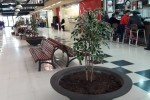 El Mercado Municipal de Castilla ya tiene plantas nuevas.