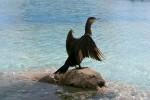 El Oceanogràfic celebra el Día Mundial de los Humedales.