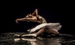 Gala del Ballet de San Petersburg (6)