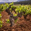 La DO Utiel-Requena expide un viña vino vid más de contraetiquetas en 2016