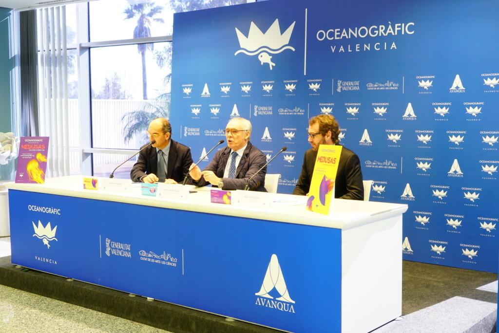 Oceanogràfic presenta sus novedades para 2017 Medusas2 (1)