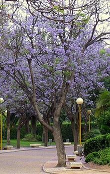 Parque de Benicalap.