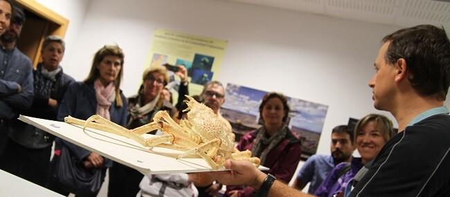 Se presentarán los nuevos talleres focalizados en medusas, los nuevos animales del Oceanogràfic.