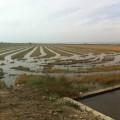 Compromís reclama al Ministeri protecció per a l'arròs valencià davant les importacions sense control