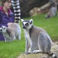 Día Mundial de la Naturaleza - Visitantes caminando entre lémures en BIOPARC Valencia