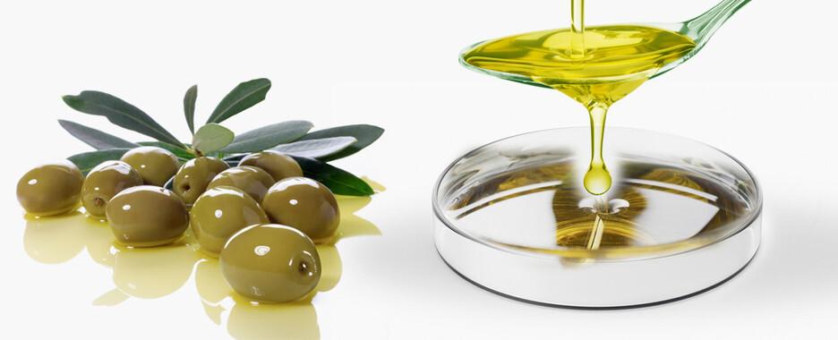 Un compuesto obtenido de la hoja de olivo es capaz de activar rutas moleculares importantes para la migración de las células del borde de una herida y acelerar su cierre. / UMU