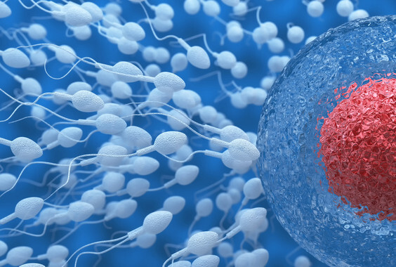 3d illustration of sperm and egg cell. Insemination concept