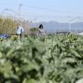 AGRIC_La_renta_agraria_valenciana_FOTO
