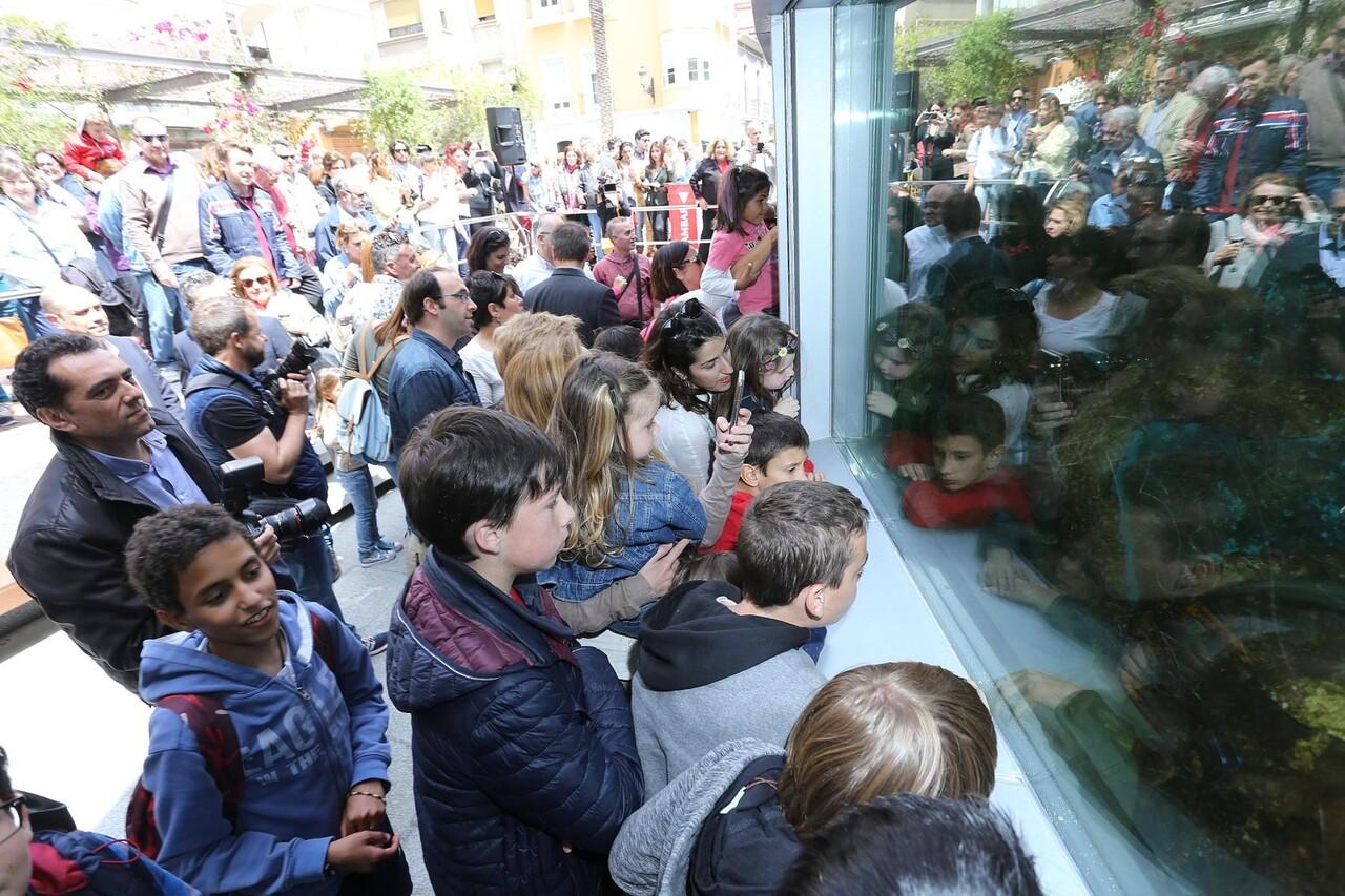 Gabriel Echávarri y Gloria Vara, han sido los encargados de inaugurar el acuario de plaza nueva en Alicante (4)