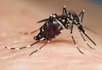 Plan de Actuación 2017 contra la plaga del mosquito tigre a través de la concejalía de Sanidad.