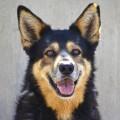 10º desfile solidario de perros de AUPA y BIOPARC Valencia para fomentar las adopciones.