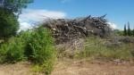 El PP pide la retirada de la montaña de restos de la tala de árboles en el Clot ante el riesgo de incendio y contagio a otros ejemplares