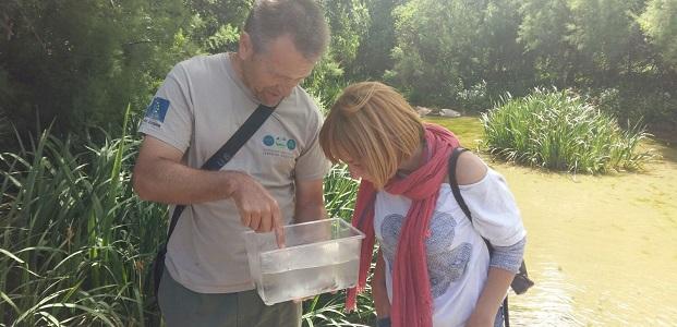 La suelta de ranas del año pasado ha dado una población abundante.