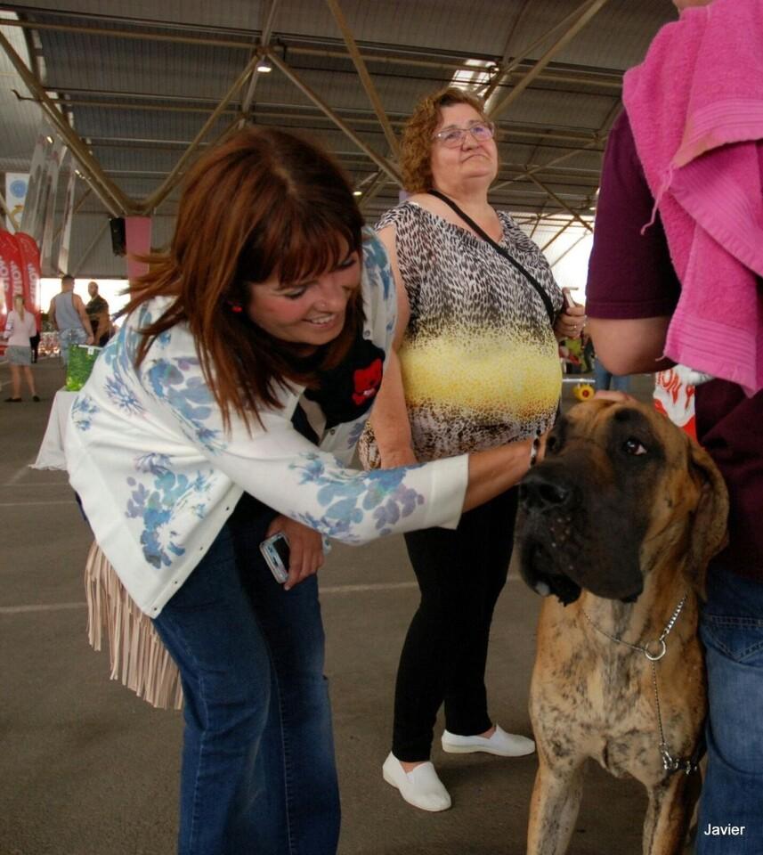 15-06-2017 Castelló serà la capital europea del gos de raça aquest cap de setmana amb suport de l'Ajuntament (2)