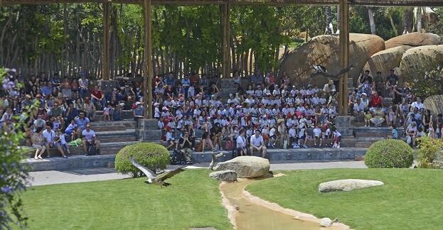 Buitres durante la exhibición educativa El Ciclo de la Vida-Bioparc Valencia.