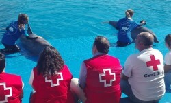 Fundación Oceanográfic y Cruz Roja preparan una campaña de divulgación por las playas sobre varamientos y medusas.