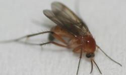 mosquito400px