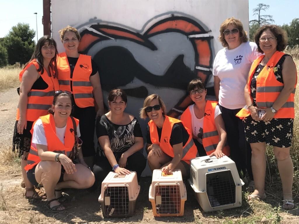 10-07-2017 Salut Pública activa una campanya per a controlar les colònies felines i conscienciar als veïns (2)