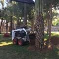 El Ayuntamiento anuncia la plantación de más de mil doscientos árboles en las calles de la ciudad.