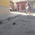El PP denuncia que la suciedad de la vía pública alimenta la proliferación de ratas en diferentes zonas de Burriana rata_plaza de las monjas_21717