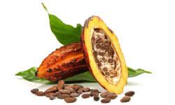 FOTO vaina cacao