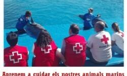 Fundación Oceanogràfic y Cruz Roja presentan en Gandia una campaña de divulgación por las playas sobre varamientos.