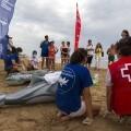 Fundación Oceanogràfic y Cruz Roja realizan sensibilización sobre varamientos en seis playas de la Comunidad Valenciana.