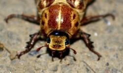 cockroach-476408_960_720