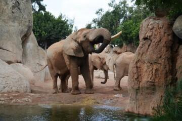 elefante y helado en BIOPARC