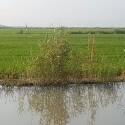 Fiscalía obliga a la Junta de Desagüe de l'Albufera a adoptar medidas tras bajar el nivel del agua