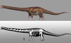 El-dinosaurio-mas-grande-del-mundo-ya-tiene-nombre_image_380
