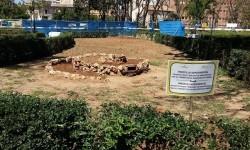 El nuevo modelo de jardinería de la ciudad apuesta por el fomento de la biodiversidad y por los tratamientos no agresivos.