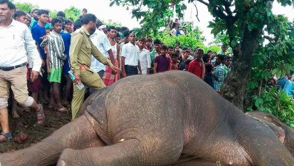 Elefante-abatido-en-India1
