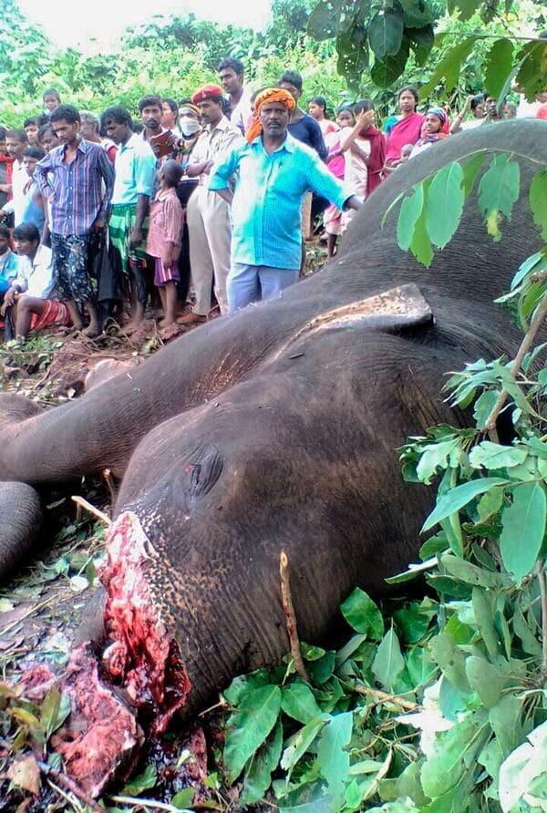 Elefante-abatido-en-India2