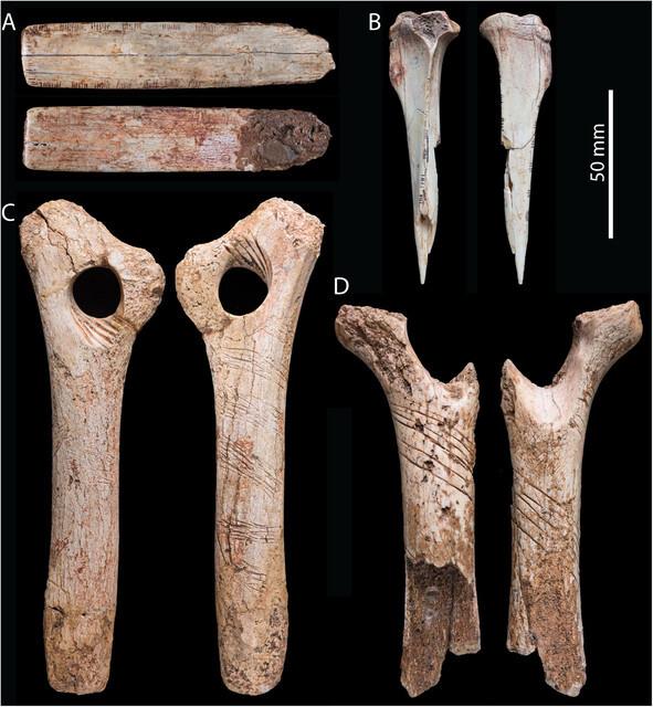 Estos-huesos-humanos-fueron-grabados-como-parte-de-un-ritual-canibal_image640_