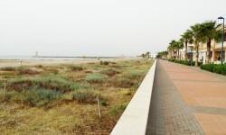 LIMPIEZA PLAYAS Ecosistemes dunars_03 (4)