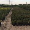 La segunda fase de plantación del Parque Central empieza en otoño.