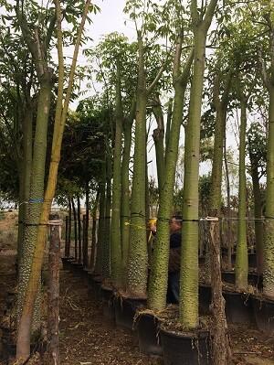 Se plantarán mil árboles y 85 mil arbustos y herbáceas.