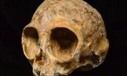 Un-craneo-de-13-millones-de-anos-arroja-luz-sobre-el-antepasado-comun-de-monos-y-humanos_image_380