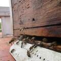 abejas Pla apicultura municipal 04 (3)
