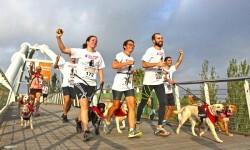 La Can-rerra solidaria Bioparc tendrá lugar el 1 de octubre.