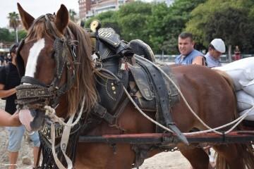 """La Seu-La Xerea-El Mercat tira y arrastra XIII Concurso de Tiro y Arrastre """"Ciudad de Valencia"""" (202)"""