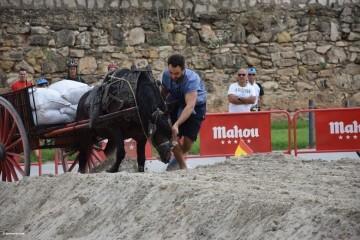 """La Seu-La Xerea-El Mercat tira y arrastra XIII Concurso de Tiro y Arrastre """"Ciudad de Valencia"""" (225)"""