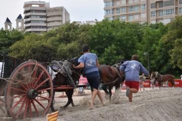 """La Seu-La Xerea-El Mercat tira y arrastra XIII Concurso de Tiro y Arrastre """"Ciudad de Valencia"""" (248)"""