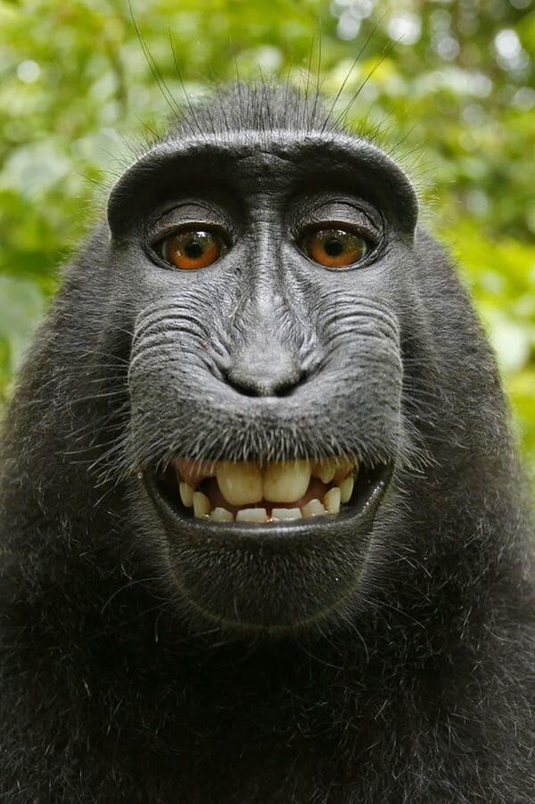 Mono-selfie-SF-3