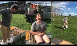 Apostó que podría sentarse desnudo en un panal repleto de abejas y la pasó muy mal