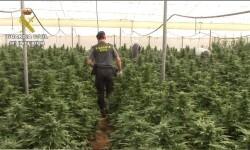 marihuana.jpg-1