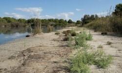 El Ayuntamiento regenera la orilla de la laguna del Racò de l'Olla más próxima a Les Quadres para favorecer la cría de aves.
